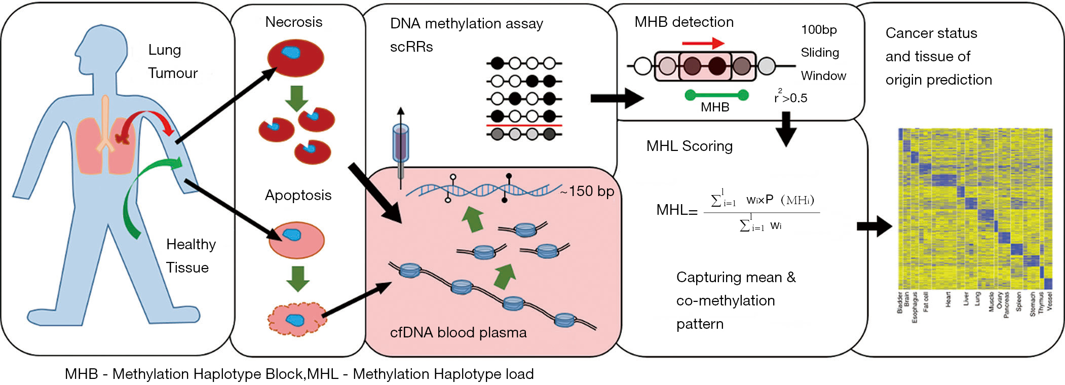 cancer detection and tissue of origin determination with novel
